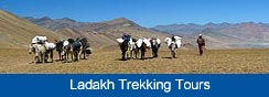 Ladakh trekking, Leh tours, Trekking Ladakh, Ladakh Trip, Ladakh Tours, Ladakh Trek, Travel Ladakh, Leh travel, hotels in Ladakh, Adventure Ladakh, Stok Kangri trek, Stok Expedition, Markha Valley trek, Visit Ladakh, Leh Hotels, Zanskar Trek, Holiday in Ladakh, Mountain Biking, Manali Leh, Ladakh Tour Operator, Ladakh Agents, Travel Leh Ladakh, Ladakh trekking information, Ladakh trekking routes,trekking in Ladakh Trekking himalayas,india trekking tours, wildlife in Ladakh, Leh Trekking ,trekking packages, trekking travel, fixed departure tours, Ladakh information like wildlife in Ladakh and other travel related information on Leh Ladakh, Leh tours, Leh trekking tour, Trekking tours Leh